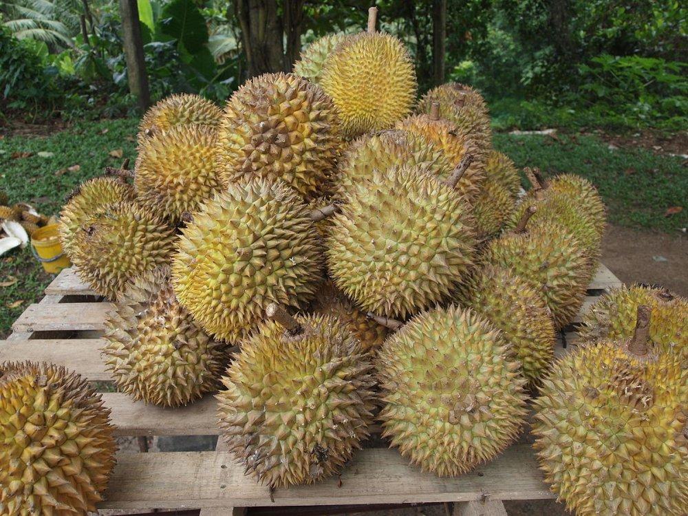 1200px-Durian.jpg