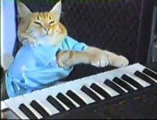 220px-Keyboard_cat.jpg