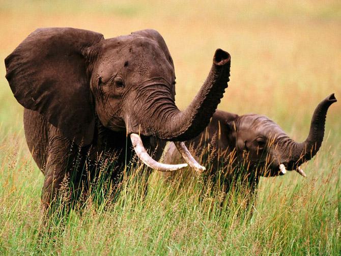 Cute+Elephants.jpg