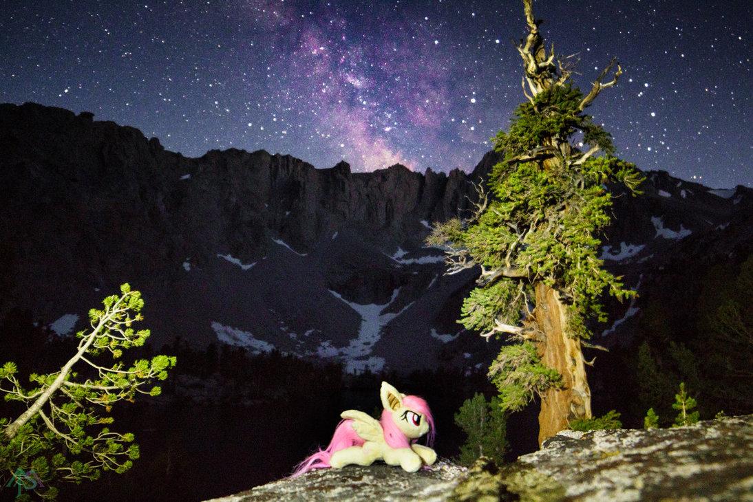 midnight_dreams___flutterbat_patw_by_flu