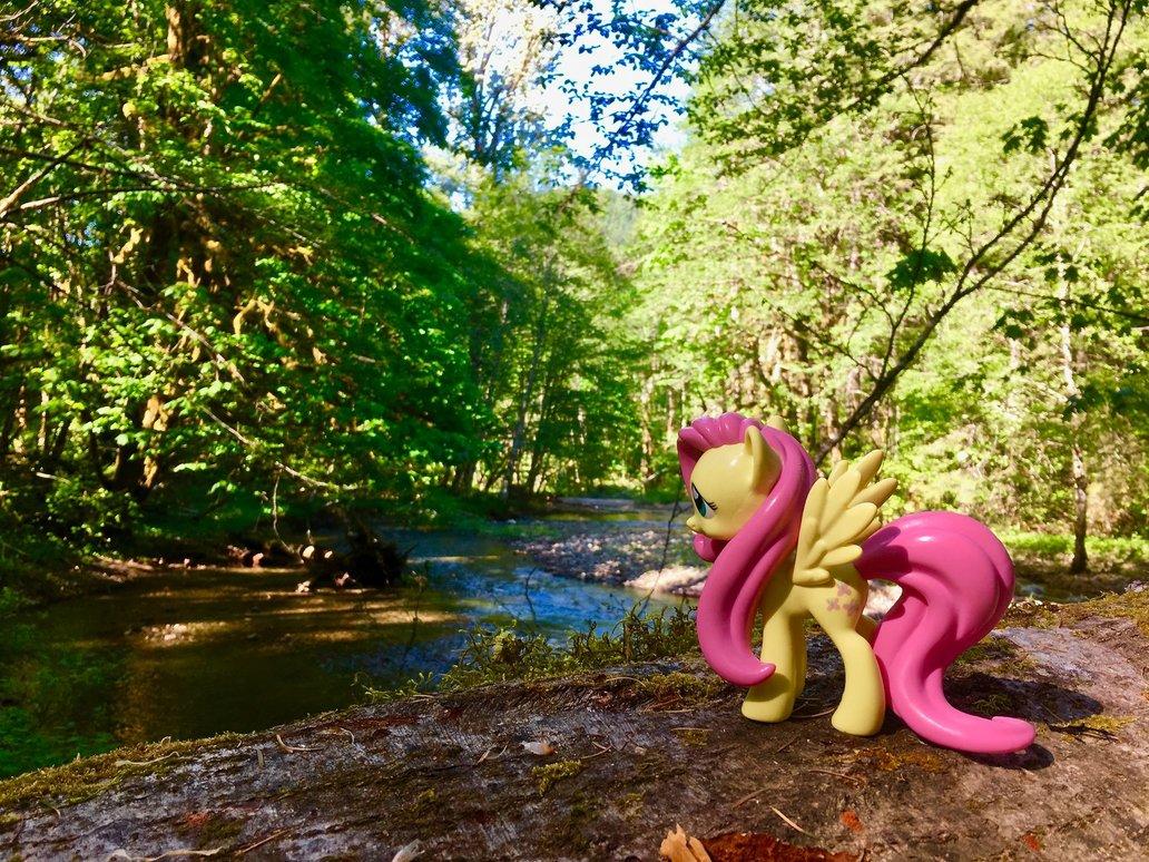 on_the_dry_creek_trail_by_fluttershyhike