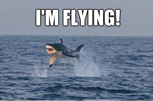 shark-meme-2.jpg