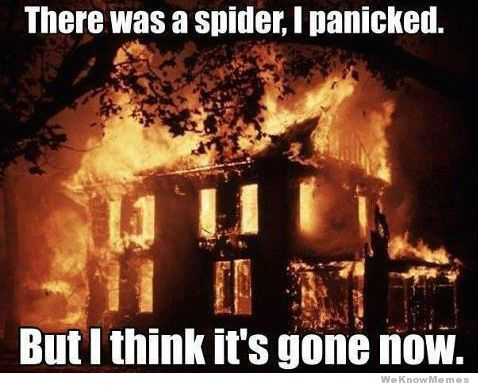 there-was-a-spider-i-panicked.jpg
