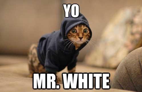 yo-mr-white-57490.jpg