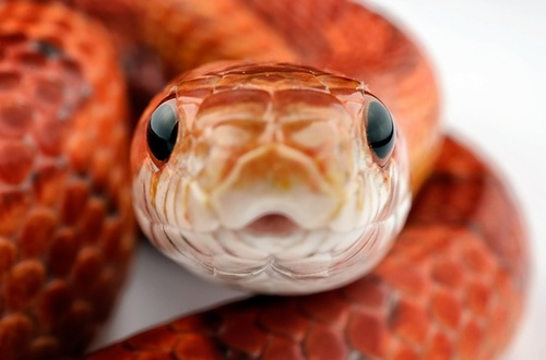 pet snakes general discussion mlp forums
