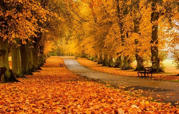 leaves-trees-forest-park-5336.jpg.baa15dbda9f9740b4f844b7dfc00902d.jpg