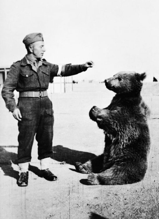 Wojtek_the_bear.thumb.jpg.62be9a7907ed964ea0fb078e1f84a7eb.jpg