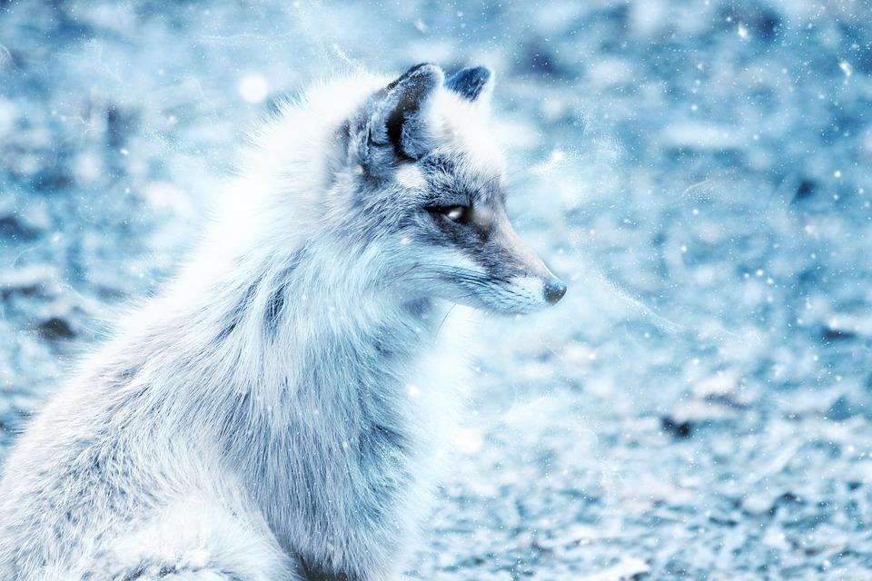 fox-2401825_960_720.jpg