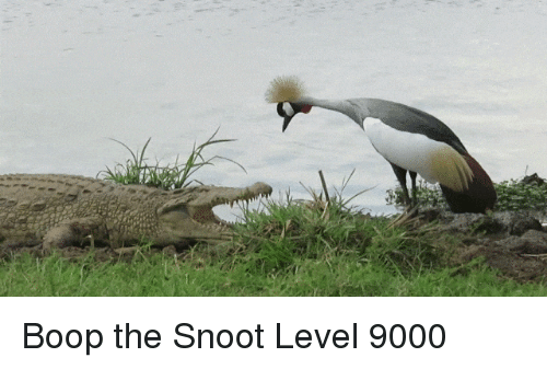 boop-the-snoot-level-9000-28379901.png.c11abe765ce4097428e4dec9239f5faa.png