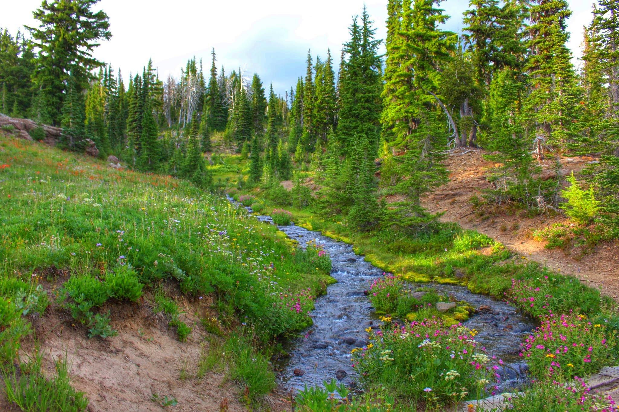 Hiking the Incredibly Beautiful Bird Creek Meadows (Mt. Adams, Washington)