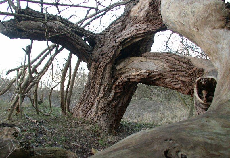 tree.jpg.fdd48a437d2fc1c2d506b0a3fc132690.jpg