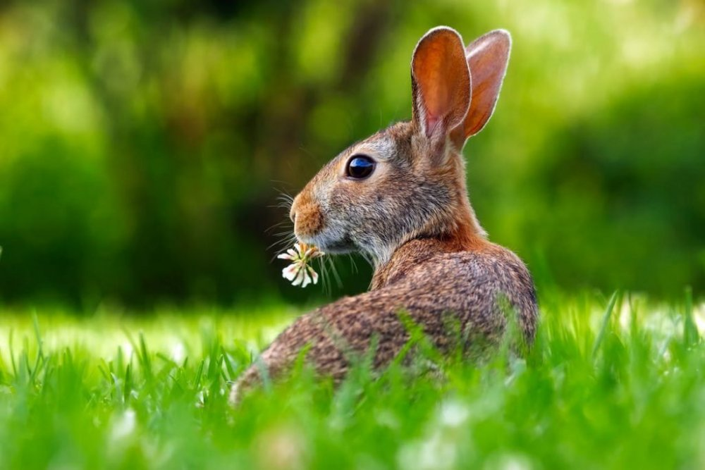 Rabbit eating flower.jpeg