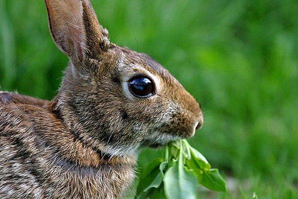 rabbit-eating-plant.jpg