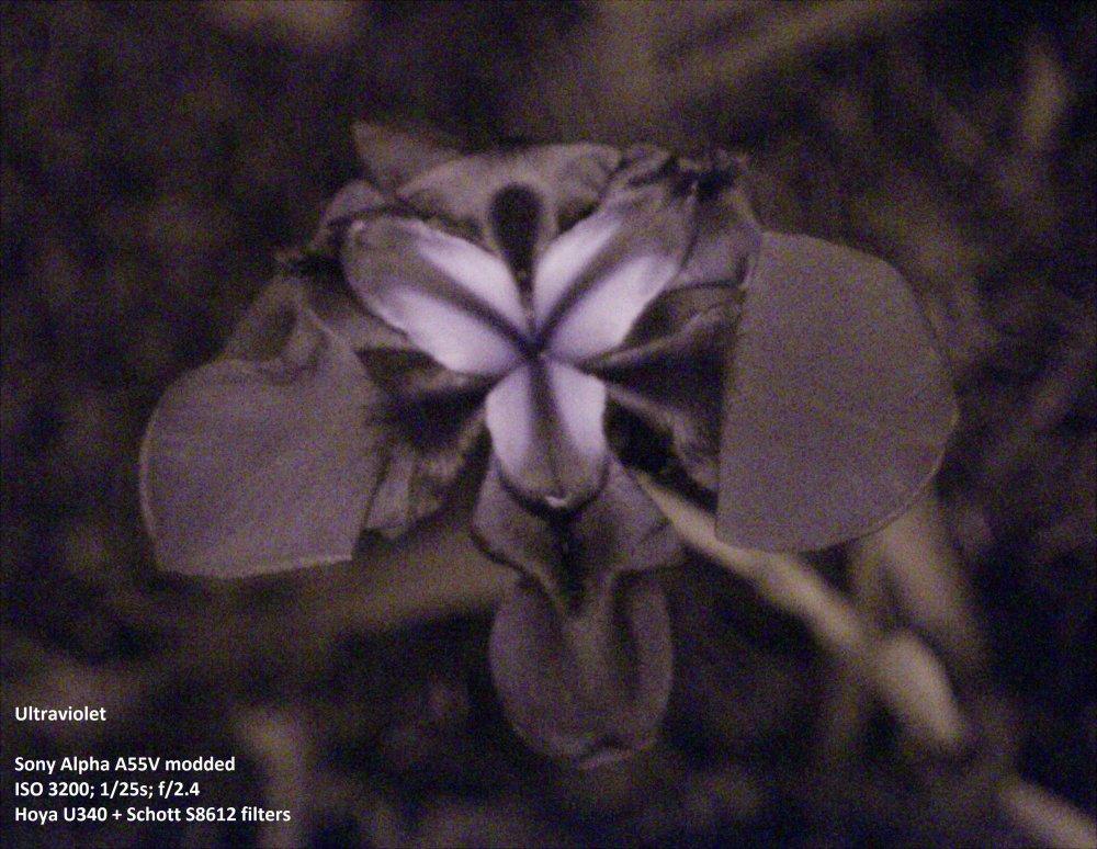 Flower_UV labeled.jpg