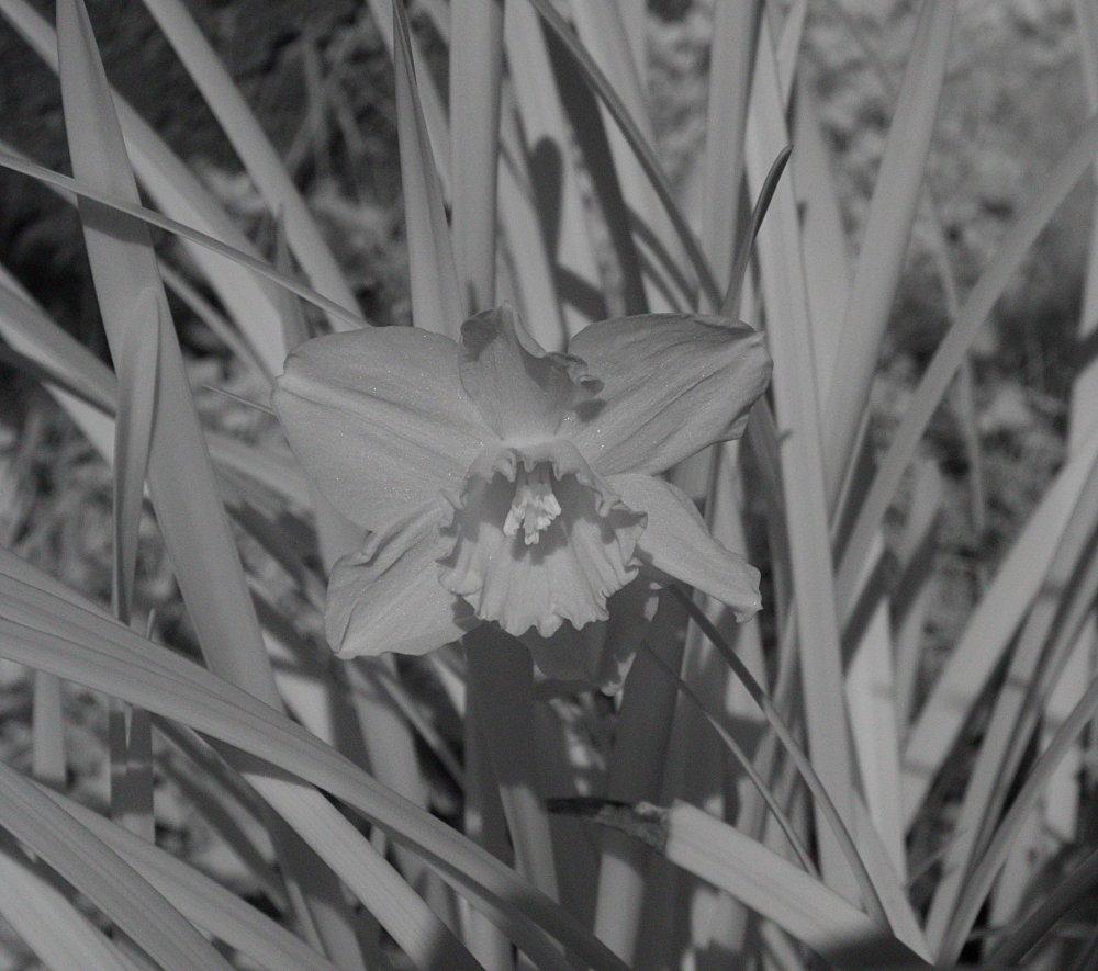 Flower_NIR_2-16-2019.jpg