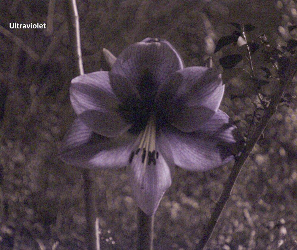 Flower B_UV.jpg