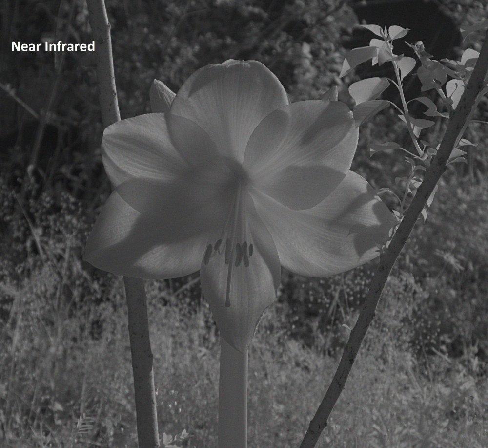 Flower B_NIR.jpg