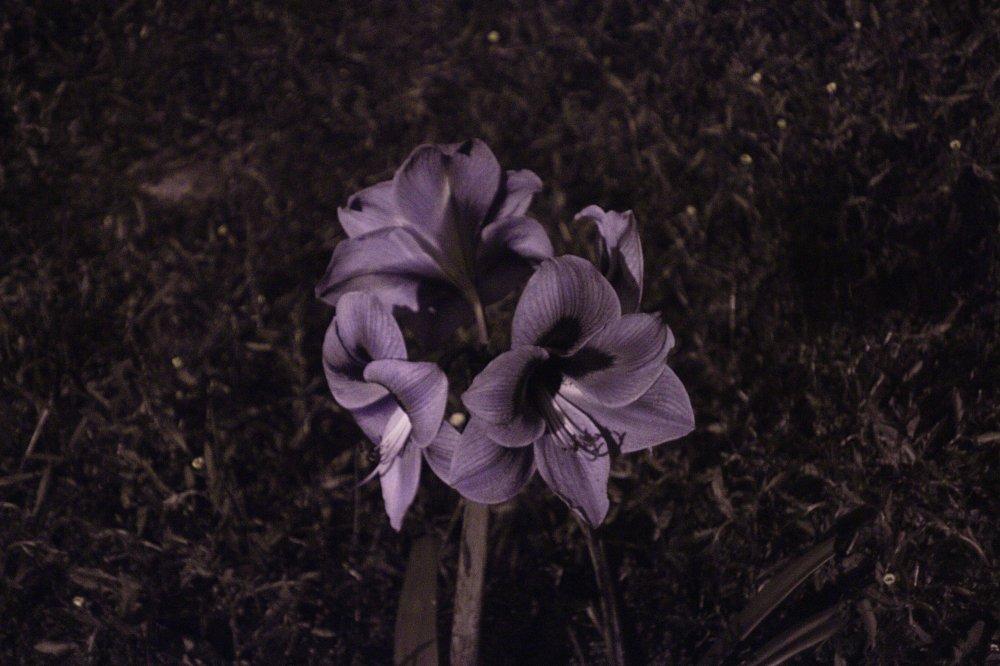 Flower_UV 3.jpg