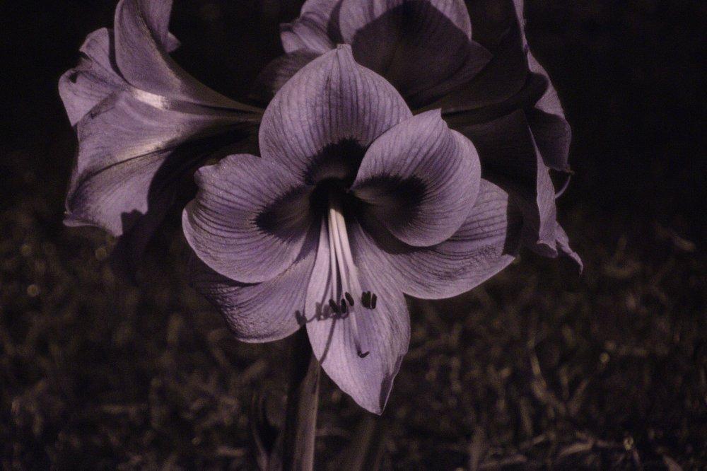 Flower_UV 1.jpg