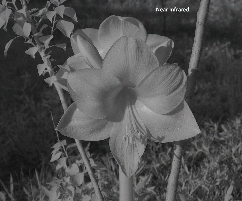 Flower A_NIR.jpg