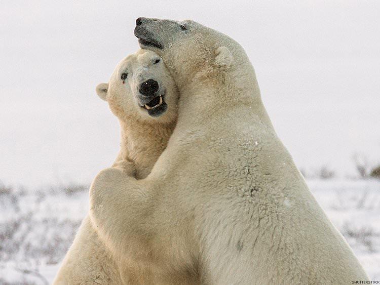 polar bear hug.jpg