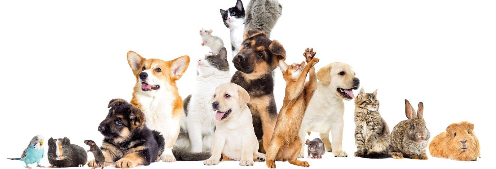 Pet Ethics