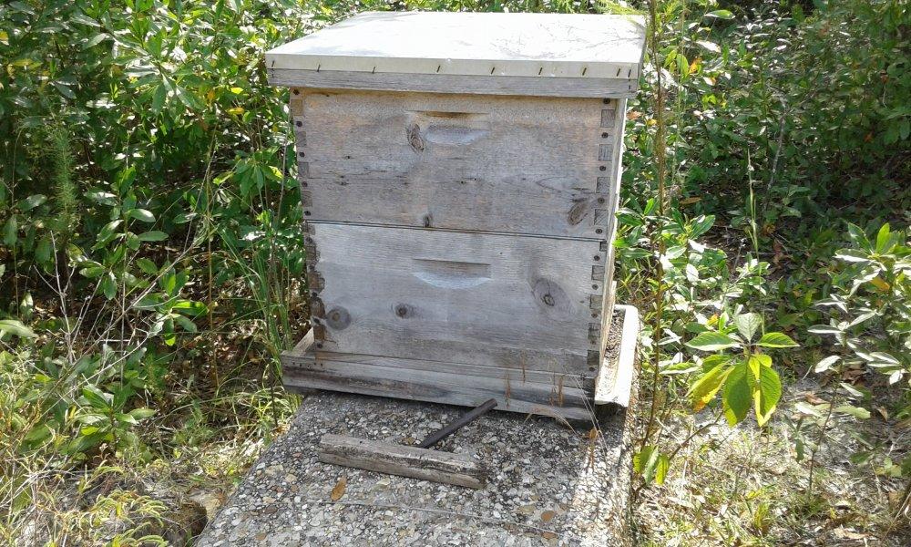Honey Bee Nest.jpg