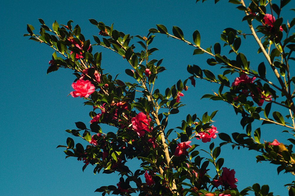 Flowering bush_vis.jpg