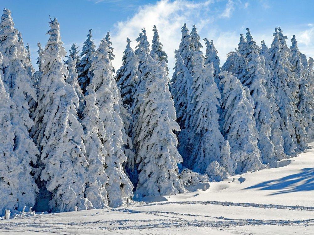Wetterprognose-Oesterreich-APA-4-3-107017071280-1707x1280.thumb.jpg.523019c4505a8b67d0f3e4e9fadeabc4.jpg