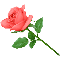 14-pink-rose-png-image-picture-download-thumb.png