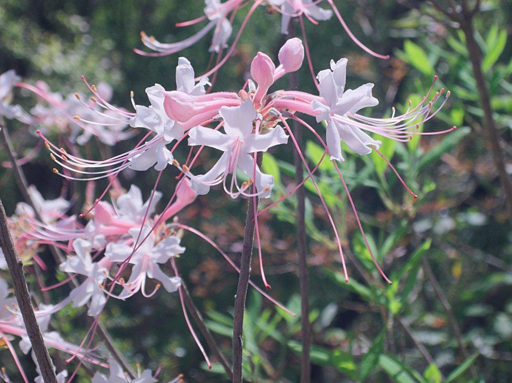 Flower_Vis_3-25-2020.jpg