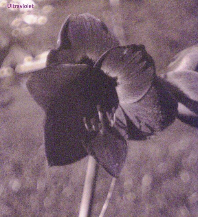 Flower_UV.jpg