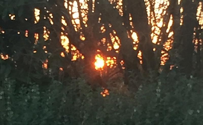 211789844_Sunset27-02-2021.jpg.1251fcb448430ee0af0cd5db98c727e4.jpg
