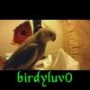 Birdy the Phoenix