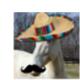 Taco Horse