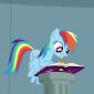RainbowDash24