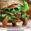 adventuretortoise
